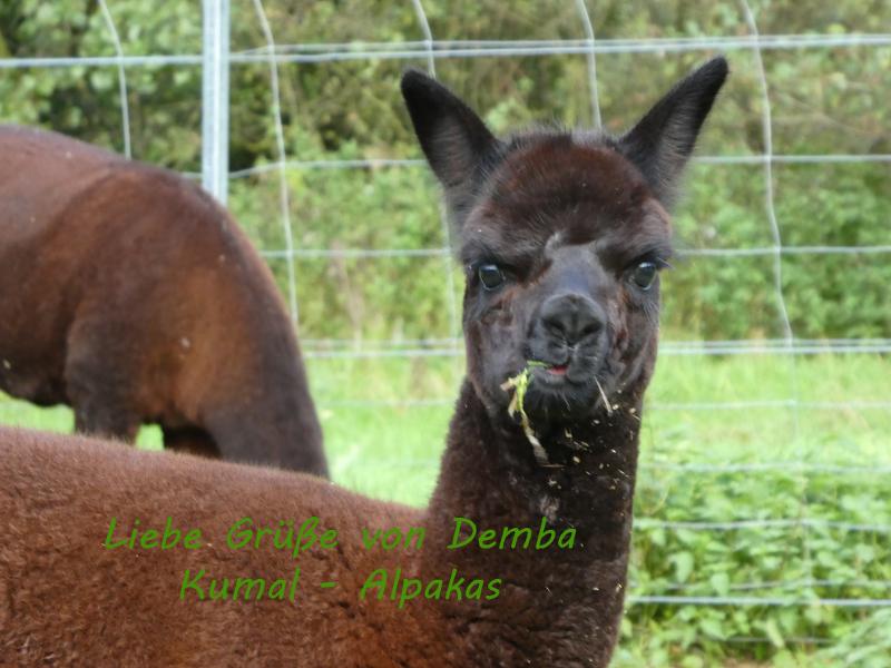 Demba_klein