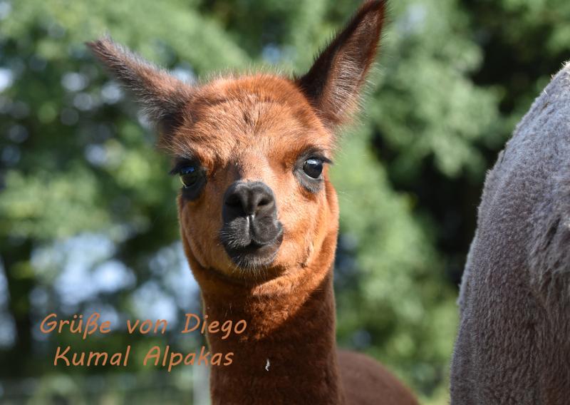 Diego3_klein